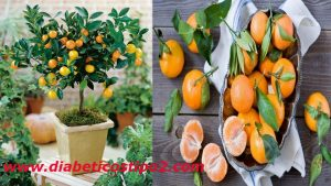 La mandarina combate la obesidad y la diabetesEspecialistas en diabetes y sobrepeso recomiendan el consumo de la mandarina para controlar ambas anomalías.