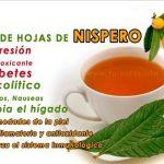 Nisperos para diabeticos – Té de Hojas