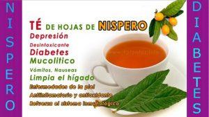 Te de hojas de nispero para diabeticos los nispero para diabeticos es una fruta con propiedades y beneficios maravillosos y muy saludables para el cuerpo