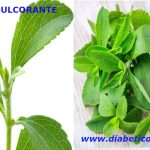 Stevia endulzante para diabeticos – Beneficios y propiedades