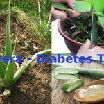 Como se prepara el aloe vera para combatir la diabetes
