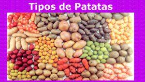 Jugo de patata crudo para la diabetesLa patata cruda contiene azúcares naturales que son fácilmente digestibles, pero cuando se cocina la patata, estos