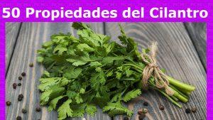 El cilantro contiene muchas propiedades preventivas y curativas entre ellas la diabetes tipo 2. Esta hierba de gran aroma y sabor trabaja directamente en nuestro páncreas estimulando la creación de la hormona insulina.