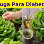 Lechuga para la diabetes – Beneficios y propiedades