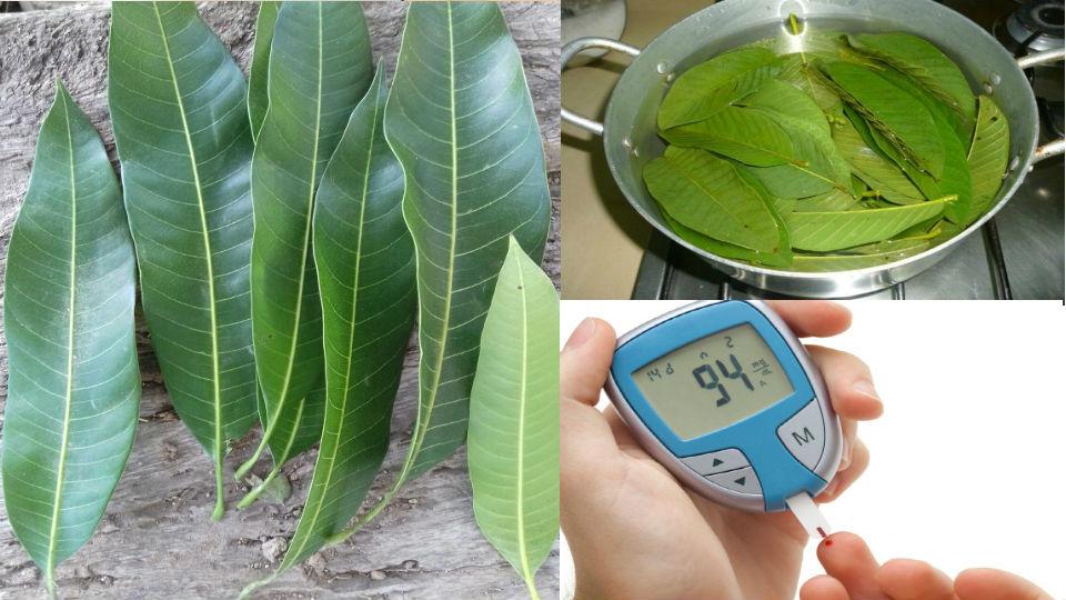 Hoy te revelaremos como puedes preparar las hojas de mangos para revertir los efectos negativos de la diabetes.Las hojas de mango tiene compuestos y propi