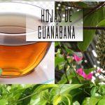 Hojas de guanábana previene la diabetes y el cáncer