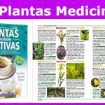 100 plantas medicinales para diabéticos