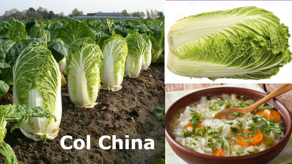 Col china contra la diabetes La col china es una verdura que ayuda a personas con diabetes y obesidad los cuales tiene riesgos en su salud.