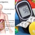 Sistema digestivo ✅ Tipos de diabetes