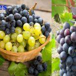 Uvas para diabéticos tipo 2