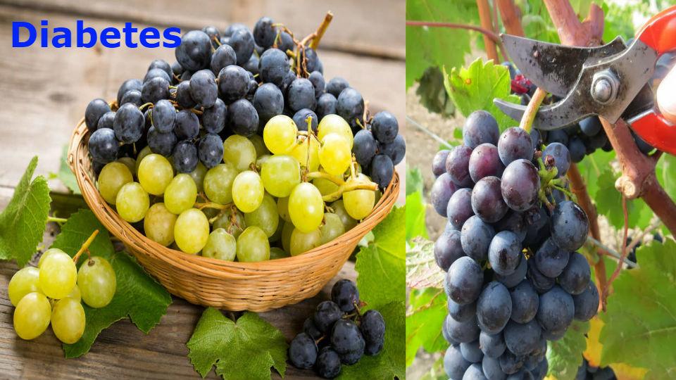 ¿los diabéticos pueden comer uvas? Esta pregunta es muy común en un paciente con diabetes que cuida su salud y es responsable en las frutas que consume.
