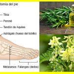 Plantas y Hierbas para el Pie Diabético