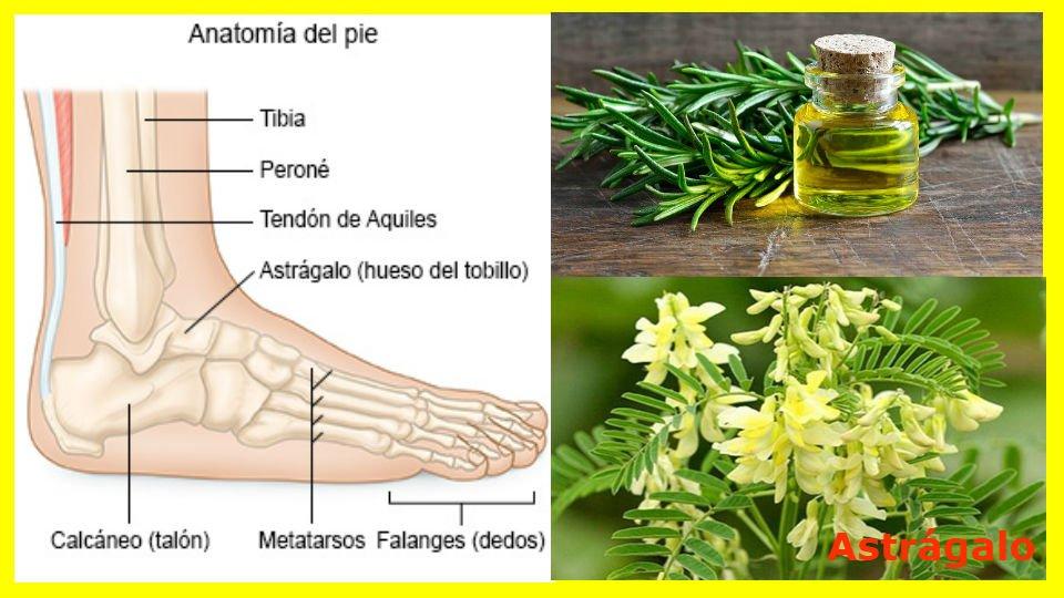 Hierbas y plantas contra el pie diabético El pie diabético es una de las principales afecciones que derivan de la diabetes mellitus. Siendo la aparición de
