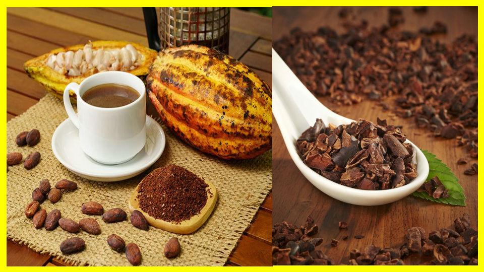 La cáscara de cacao podría combatir la diabetes producida por la obesidad Los beneficios que el cacao aporta la salud son más que evidentes y conocidos por